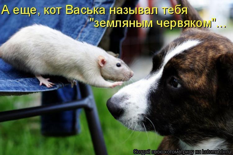 """Котоматрица: А еще, кот Васька называл тебя """"земляным червяком""""..."""
