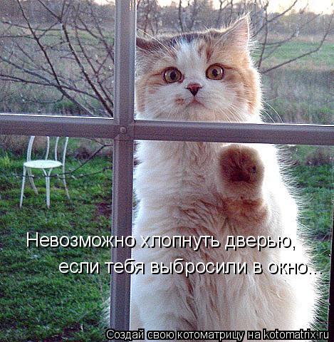 Котоматрица: Невозможно хлопнуть дверью,  если тебя выбросили в окно...