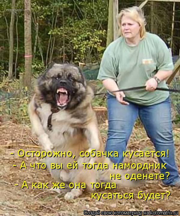 Котоматрица: - Осторожно, собачка кусается!    - А что вы ей тогда намордник  не оденете?  - А как же она тогда  кусаться будет?