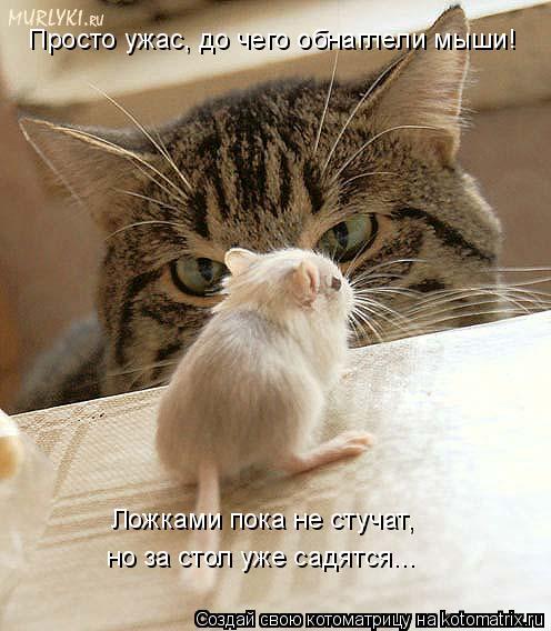 Котоматрица: Просто ужас, до чего обнаглели мыши! Ложками пока не стучат,  но за стол уже садятся...