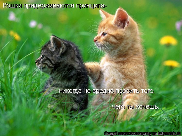 Котоматрица: Кошки придерживаются принципа- никогда не вредно просить того, чего ты хочешь.