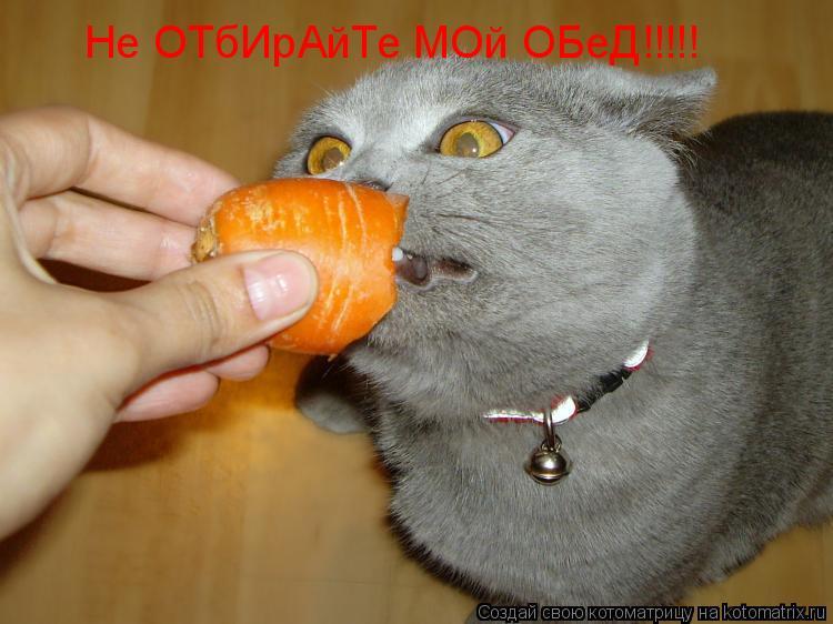 Котоматрица: Не ОТбИрАйТе МОй ОБеД!!!!!