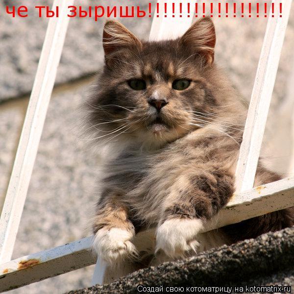 Котоматрица: че ты зыришь!!!!!!!!!!!!!!!!!!