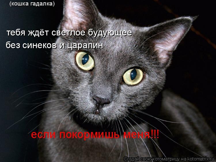 Котоматрица: (кошка гадалка) тебя ждёт светлое будующее без синеков и царапин если покормишь меня!!!