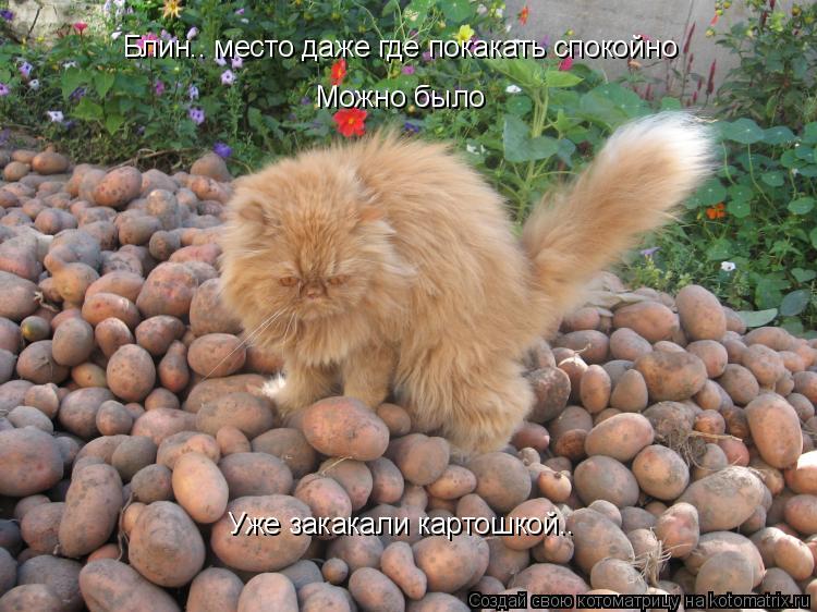 Котоматрица: Блин.. место даже где покакать спокойно Можно было Уже закакали картошкой..