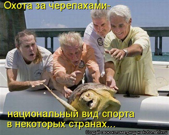 Котоматрица: Охота за черепахами-  национальный вид спорта  в некоторых странах...