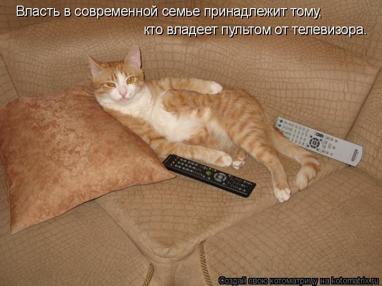 Котоматрица: Власть в современной семье принадлежит тому, кто владеет пультом от телевизора.