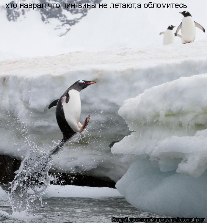Котоматрица: хто наврал что пингвины не летают,а обломитесь