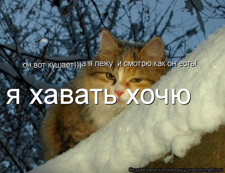 Котоматрица: он вот кушает))) а я лежу  и смотрю как он есть! я хавать хочю