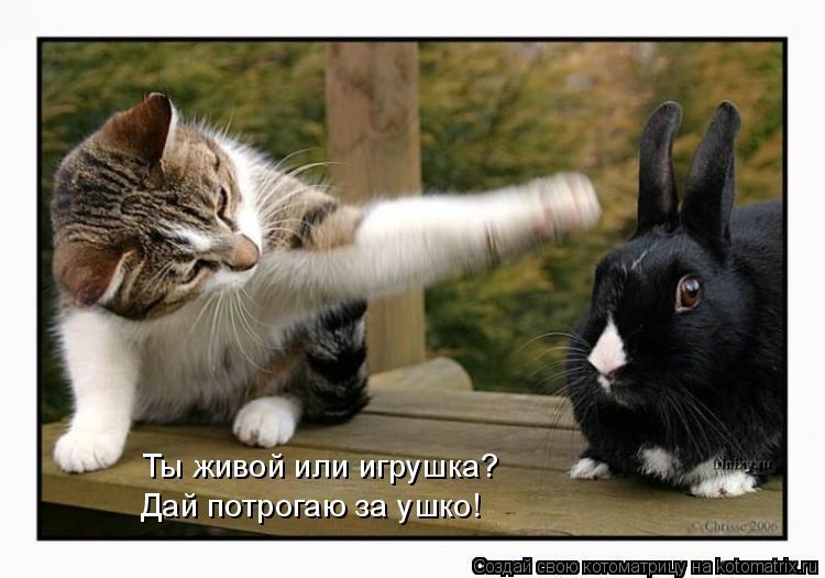 Котоматрица: Ты живой или игрушка? Дай потрогаю за ушко!