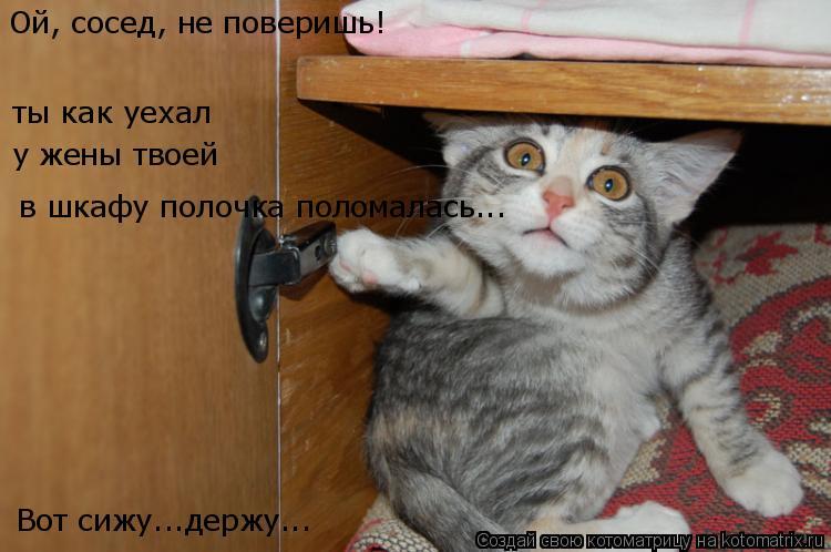Котоматрица: Ой, сосед, не поверишь!   в шкафу полочка поломалась... ты как уехал у жены твоей Вот сижу...держу...