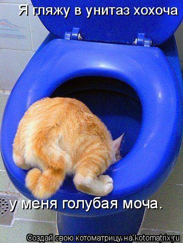 Котоматрица: Я гляжу в унитаз хохоча у меня голубая моча…