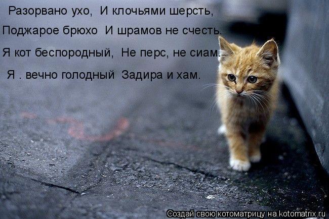 Котоматрица: Разорвано ухо,  И клочьями шерсть, Поджарое брюхо  И шрамов не счесть. Я кот беспородный,  Не перс, не сиам. Я – вечно голодный  Задира и хам.