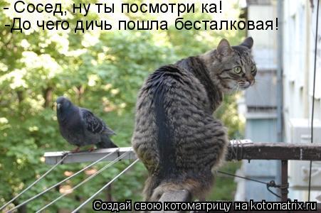 Котоматрица: - Сосед, ну ты посмотри ка! -До чего дичь пошла бесталковая!