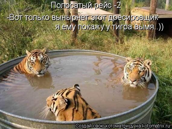 Котоматрица: Полосатый рейс -2 -Вот только вынырнет этот дресировщик я ему покажу у тигра вымя..))