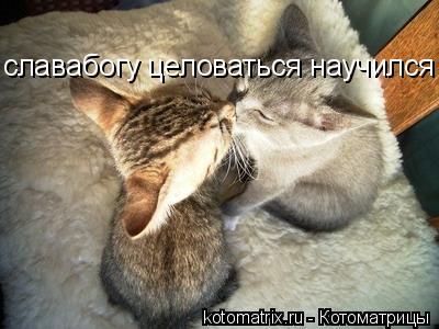 Котоматрица: славабогу целоваться научился