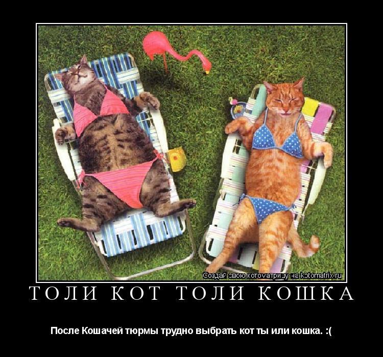 Котоматрица: Толи кот толи кошка После Кошачей тюрмы трудно выбрать кот ты или кошка. :(