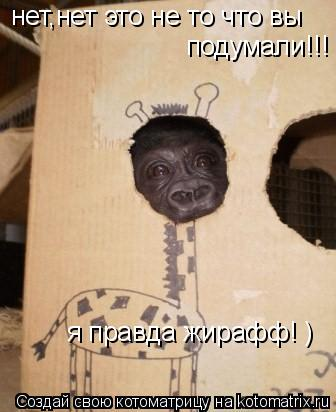 Котоматрица: нет,нет это не то что вы подумали!!! я правда жирафф! )