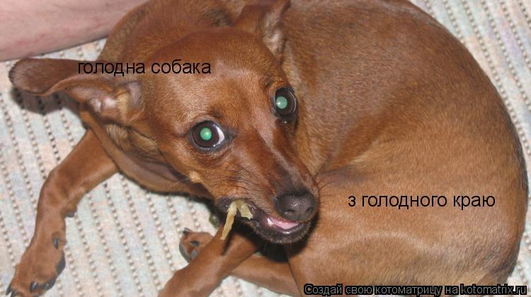 Котоматрица: голодна собака з голодного краю