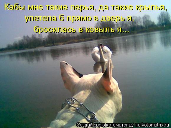 Котоматрица: Кабы мне такие перья, да такие крылья,  улетела б прямо в дверь я,  бросилась в ковыль я...