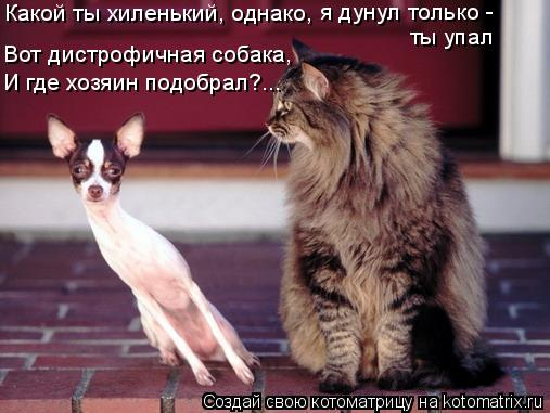 Котоматрица: Какой ты хиленький, однако, я дунул только - ты упал Вот дистрофичная собака, И где хозяин подобрал?...