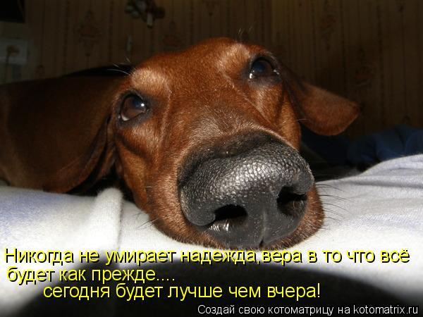 Котоматрица: Никогда не умирает надежда,вера в то что всё  будет как прежде.... сегодня будет лучше чем вчера!