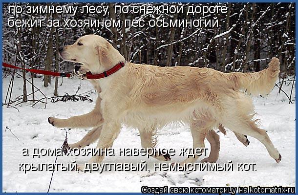 Котоматрица: по зимнему лесу, по снежной дороге бежит за хозяином пес осьминогий а дома хозяина наверное ждет крылатый, двуглавый, немыслимый кот.