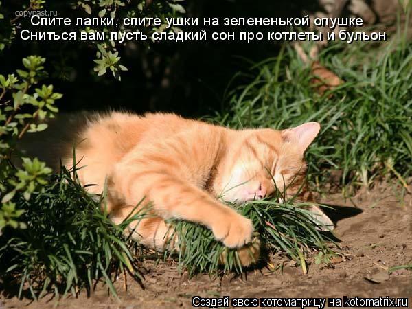 Котоматрица: Спите лапки, спите ушки на зелененькой опушке  Сниться вам пусть сладкий сон про котлеты и бульон