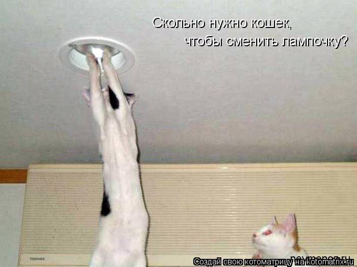 Котоматрица: Скольно нужно кошек, чтобы сменить лампочку?