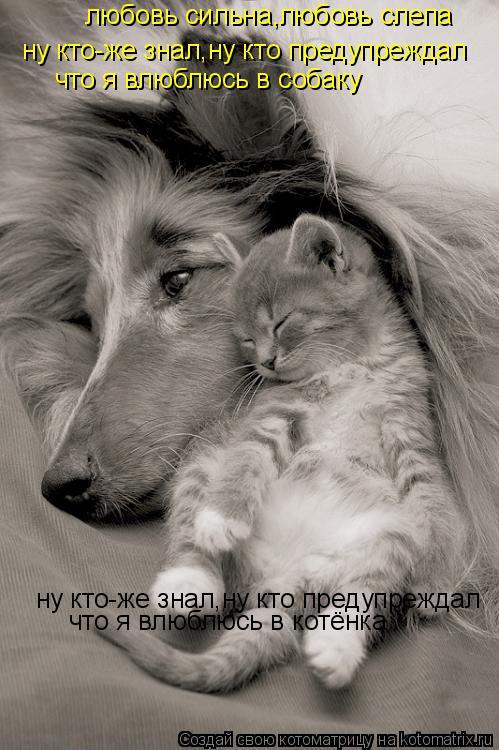 Котоматрица: любовь сильна,любовь слепа ну кто-же знал,ну кто предупреждал что я влюблюсь в собаку ну кто-же знал,ну кто предупреждал  что я влюблюсь в ко