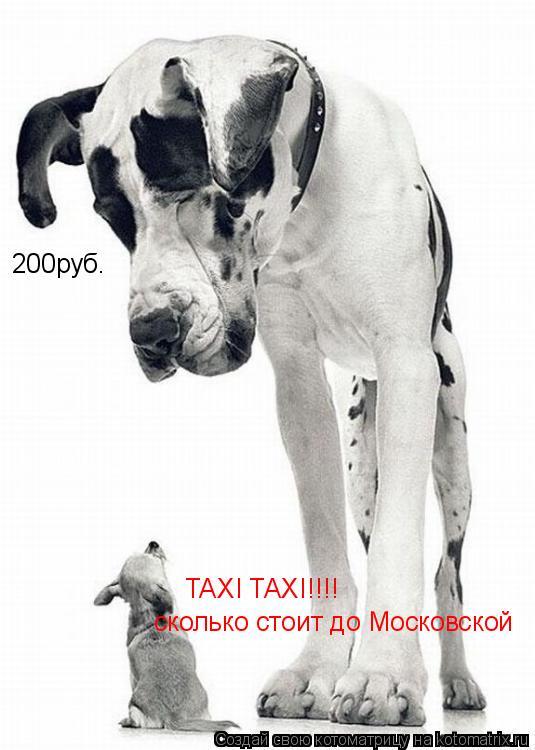 Котоматрица: TAXI TAXI!!!! сколько стоит до Московской 200руб.