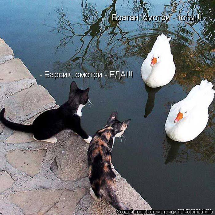 Котоматрица: - Братан, смотри - коты!!!  - Барсик, смотри - ЕДА!!!