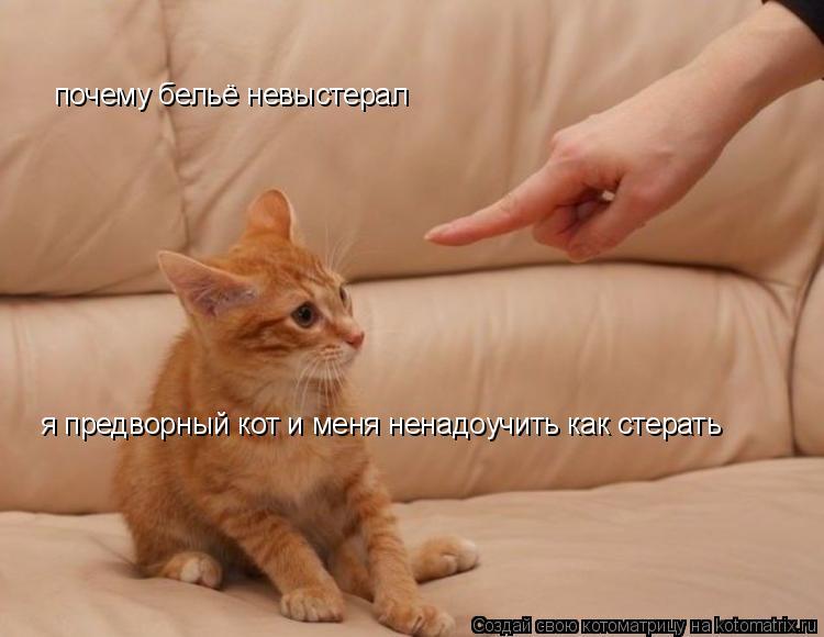 Котоматрица: почему бельё невыстерал я предворный кот и меня ненадоучить как стерать