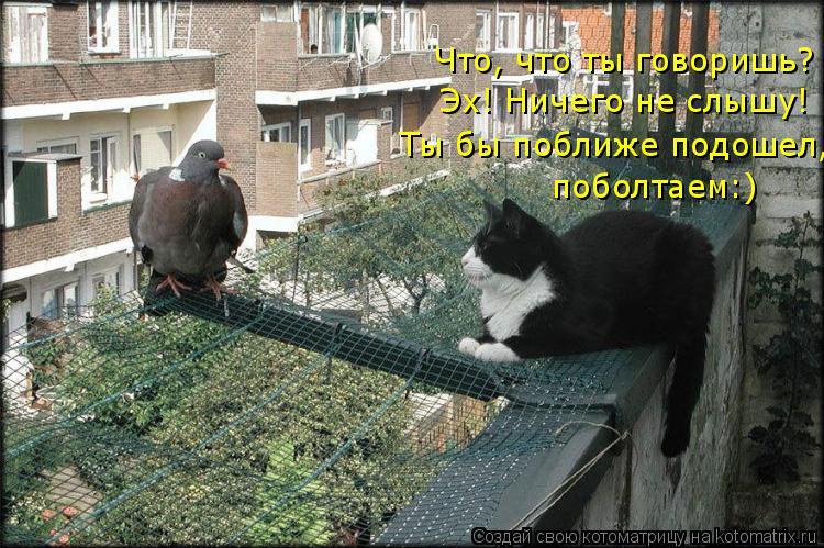 Котоматрица: Что, что ты говоришь? Эх! Ничего не слышу! Ты бы поближе подошел, поболтаем:)