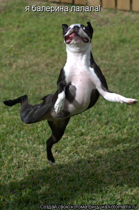 Котоматрица: я балерина лалала!