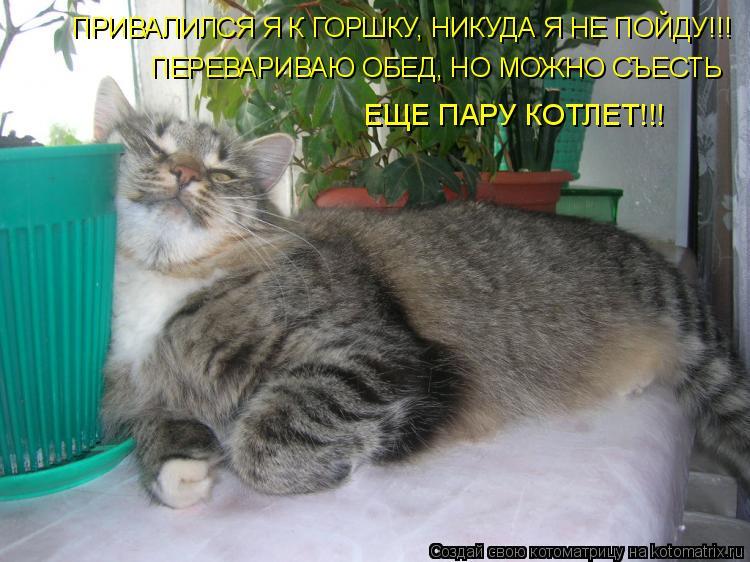 Котоматрица: ПРИВАЛИЛСЯ Я К ГОРШКУ, НИКУДА Я НЕ ПОЙДУ!!! ПЕРЕВАРИВАЮ ОБЕД, НО МОЖНО СЪЕСТЬ  ЕЩЕ ПАРУ КОТЛЕТ!!!