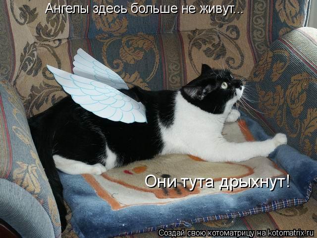 Котоматрица: Ангелы здесь больше не живут... Они тута дрыхнут!