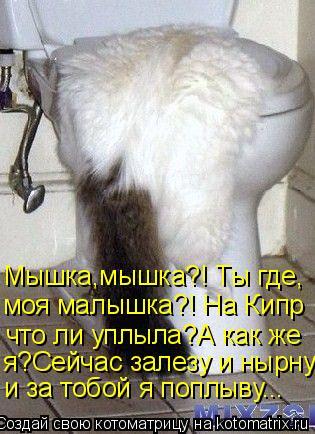 Котоматрица: Мышка,мышка?! Ты где, моя малышка?! На Кипр что ли уплыла?А как же  я?Сейчас залезу и нырну, и за тобой я поплыву...