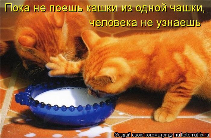 Котоматрица: Пока не поешь кашки из одной чашки,  человека не узнаешь