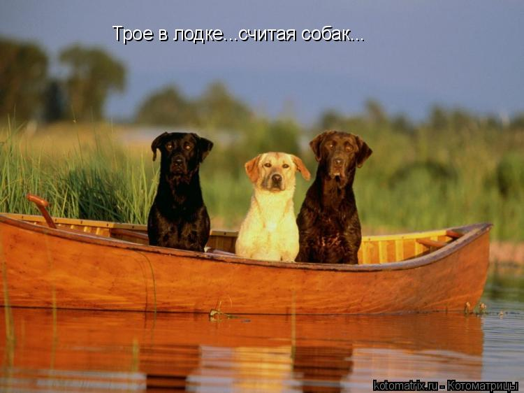 Котоматрица: Трое в лодке...считая собак...