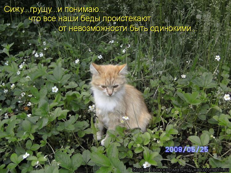 Котоматрица: Сижу...грущу...и понимаю... что все наши беды проистекают  от невозможности быть одинокими...