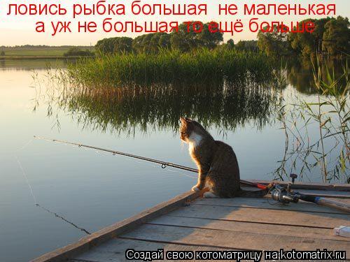 Котоматрица: ловись рыбка большая  не маленькая а уж не большая то ещё больше