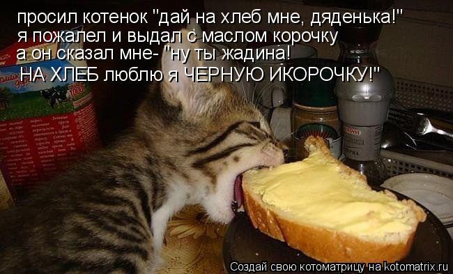 """Котоматрица: просил котенок """"дай на хлеб мне, дяденька!"""" я пожалел и выдал с маслом корочку а он сказал мне- """"ну ты жадина! НА ХЛЕБ люблю я ЧЕРНУЮ ИКОРОЧКУ!"""""""