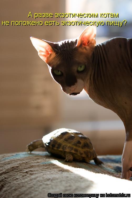 Котоматрица: А разве экзотическим котам  не положено есть экзотическую пищу?