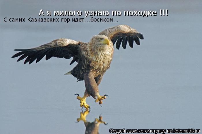 Котоматрица: А я милого узнаю по походке !!! С самих Кавказских гор идет...босиком...