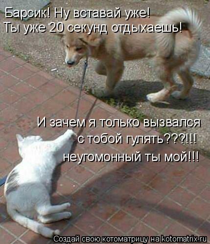 Котоматрица: И зачем я только вызвался с тобой гулять???!!! неугомонный ты мой!!! Барсик! Ну вставай уже! Ты уже 20 секунд отдыхаешь!