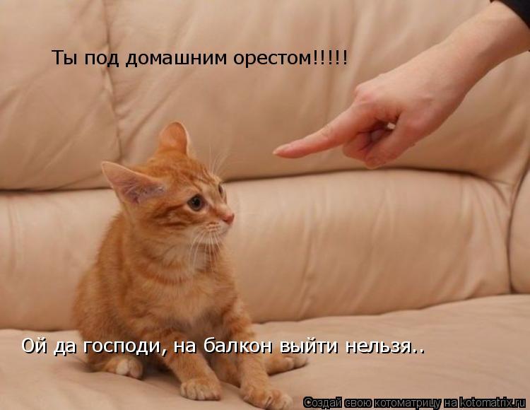 Котоматрица: Ты под домашним орестом!!!!! Ой да господи, на балкон выйти нельзя..