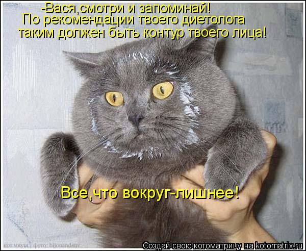 Котоматрица: таким должен быть контур твоего лица! По рекомендации твоего диетолога -Вася,смотри и запоминай! Все,что вокруг-лишнее!