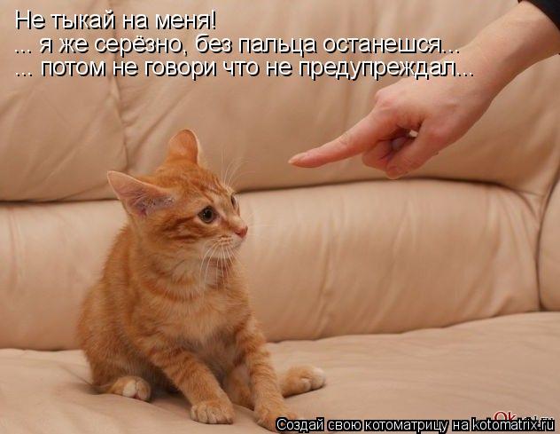 Котоматрица: Не тыкай на меня!  ... я же серёзно, без пальца останешся... ... потом не говори что не предупреждал...