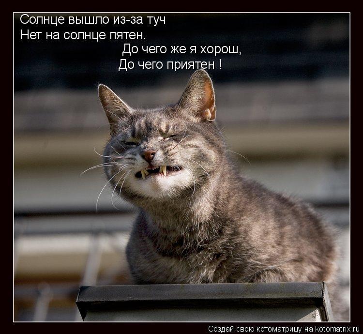 Котоматрица: Солнце вышло из-за туч Нет на солнце пятен. До чего же я хорош, До чего приятен !
